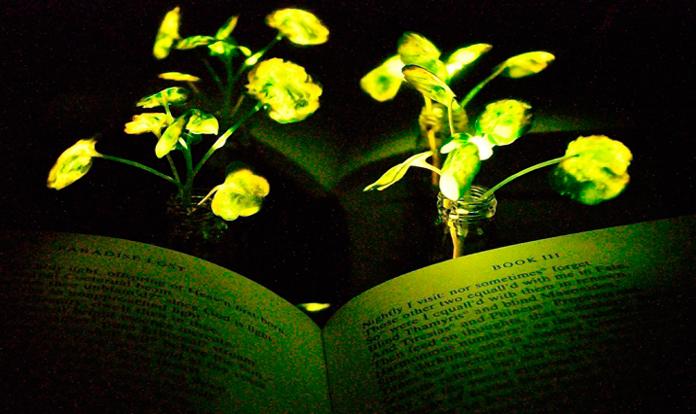 MIT's plants