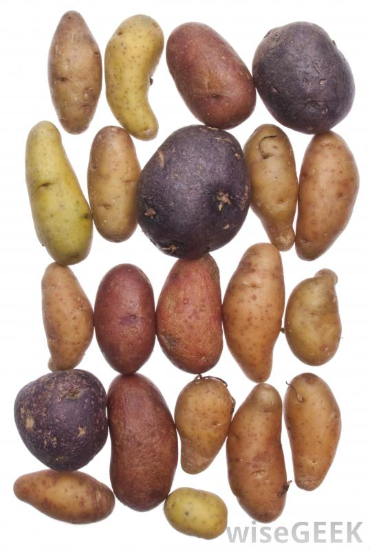 what-are-some-different-kinds-of-potatoes-with-pictures-types-of-potatoes