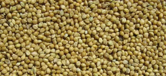 Korralu-Foxtail-Millets