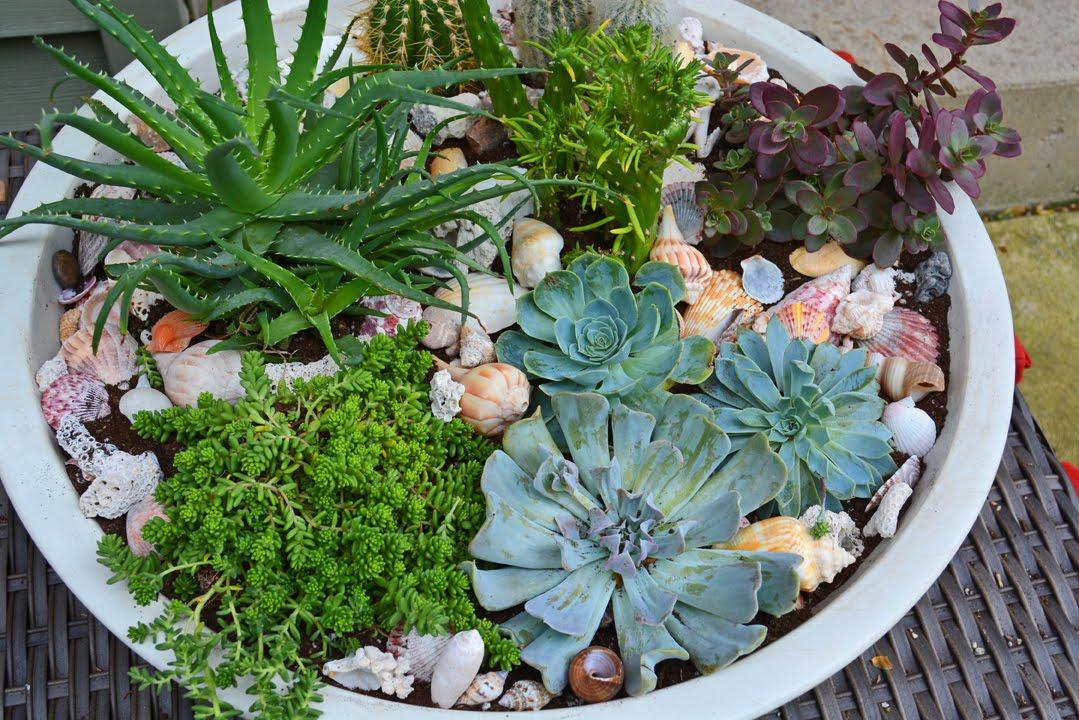 succulent-container